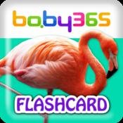 baby365-中英双语闪卡-鸟类和昆虫